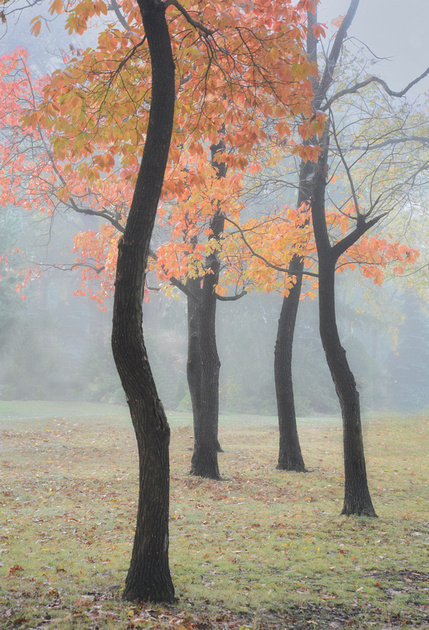 Trees Dancing in the Mist