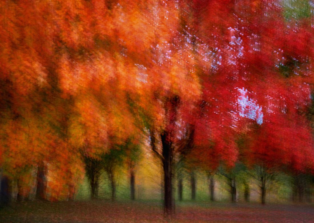 Tree Allee, Warinanco Park - Impressionist