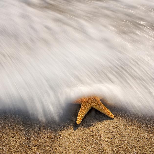 Seastar Washout